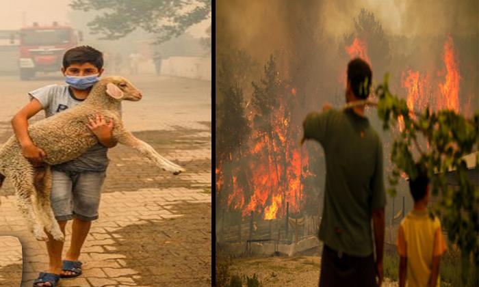Orman yangınlarının meydana geldiği 5 kent 'Genel Hayata Etkili Afet Bölgesi' ilan edildi.